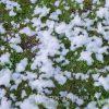 Sneeuwmachine sneeuw huren - Partytentverhuur Dordrecht